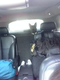 3rd Passenger Peeking